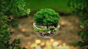 faveur arbre opportunite